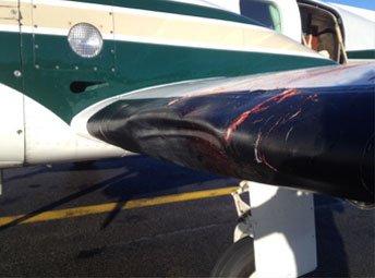 minor birdstrike damage